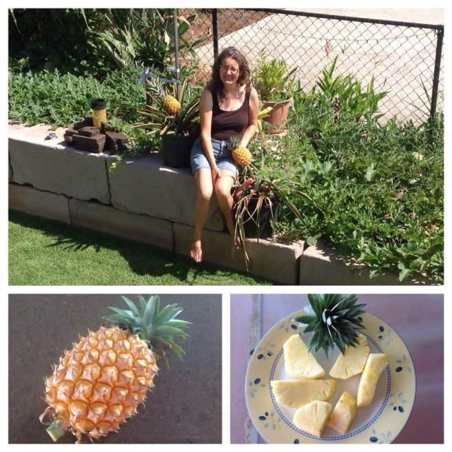 Birthday Pineapple January 2016