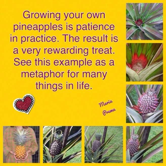 Pineapple wisdom